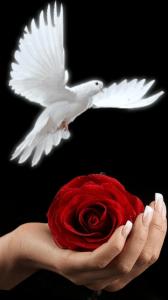 frutos del espiritu santo 1
